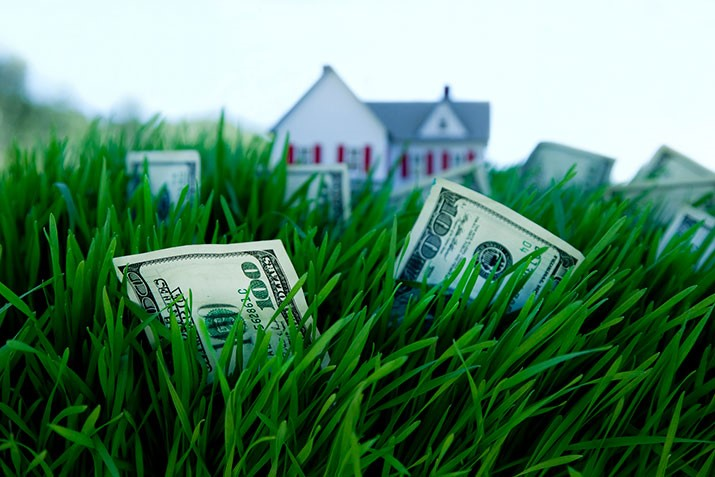 Dollars grass