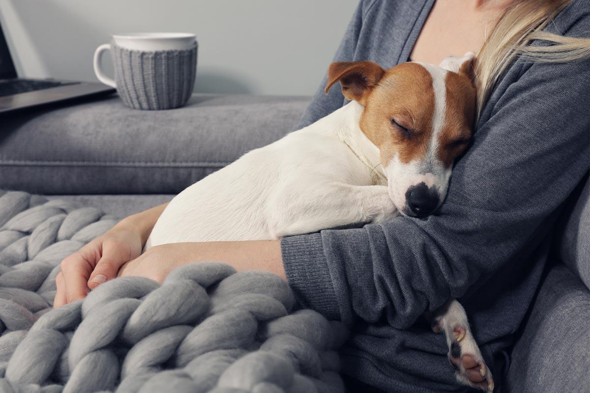 Pets-as-Comfort