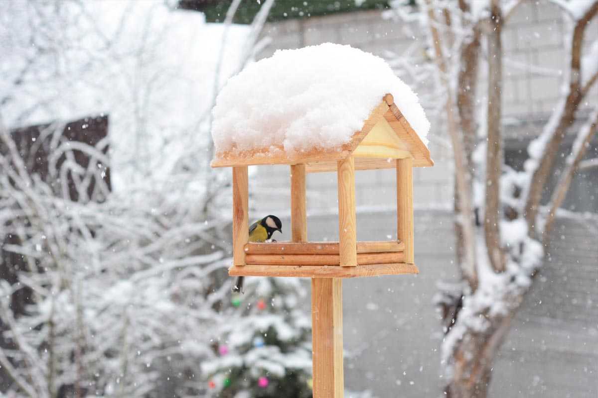Tips to Protect Yards This Winter